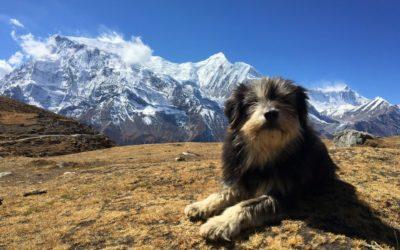 Nepal, Annapurna Runde / Annapurna Circuit (T103)