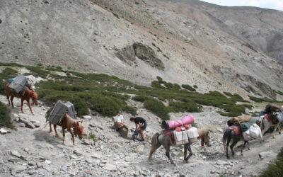 Indien, Ladakh, 2009 (1)