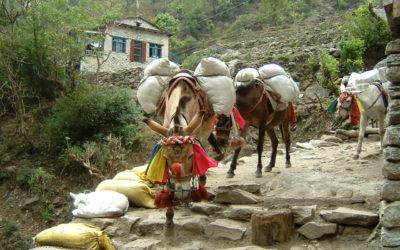 Annapurna Runde (T109, T103), Warentransport auf dem Muli